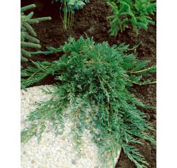Juniperus horizontalis ´Wiltonii´ / Jalovec polehlý, 15 - 20 cm, K9