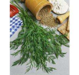 Carum carvi ´PROCHAN´ / Kmín, bal. 2 g
