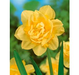 Narcis ´Golden Ducat´, bal. 5 ks, 12/14