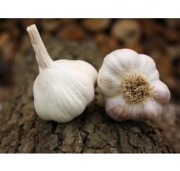 Allium sativum ´Benátčan´ / Kuchyňský česnek na výsadbu, bal. 3 hlaviček, 125 g