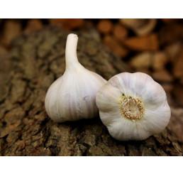 Allium sativum ´Bjetin´ / Kuchyňský česnek na výsadbu, bal. 3 hlaviček, 125 g