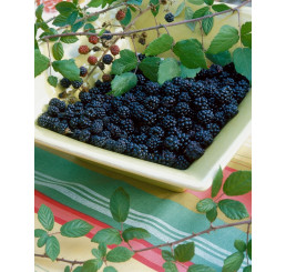 Rubus fruticosus ´Black Jewel´ / Ostružina, 80-100 cm, K11