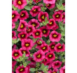Calibrachoa Sweet Bells® ´Cherry Red Morn´ / Minipetúnie, bal. 6 ks sadbovačů