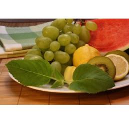 BIO Salvia dorisiana / Ovocná šalvěj, K12