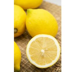 Citrus limon ´Genoa´ / Citroník, 25-40 cm, C2