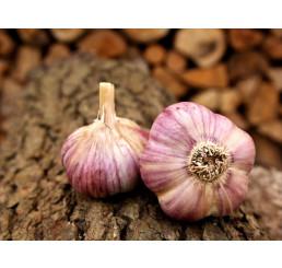 Allium sativum ´Havran´ / Kuchyňský česnek na výsadbu, bal. 3 hlaviček, 125 g
