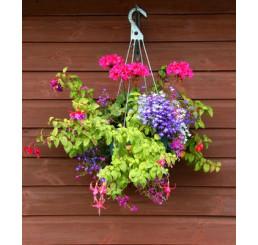 Kolekce 9 rostlin do truhlíků + 1 závěsný bílý květináč