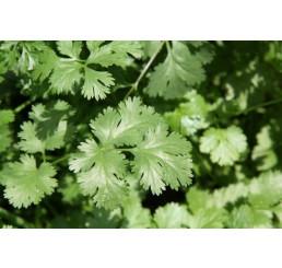 BIO Coriandrum sativum / Koriandr, K12