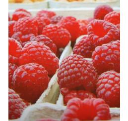 Rubus idaeus ´Pokusa´ / Maliník červený, keř, K9