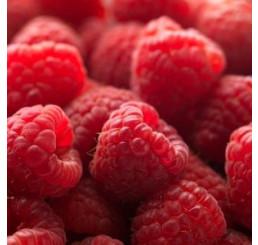 Rubus idaeus ´Polesie´ / Maliník červený, K9