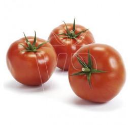 Rajče Imagine ® Maxi Red F1, přirozeně rezistentní, roubovaná rostlina, K12