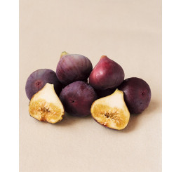 Ficus carica ´Brown Turkey´ / Černoplodý fíkovník, C2
