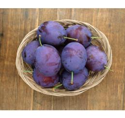 Prunus domestica ´Stanley´ / Slivoň podzimní velkoplodá, myr.