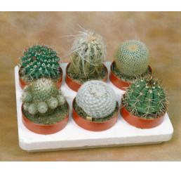 Cactacea mix / Kaktusy směs, bal. 50 s