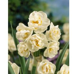 Narcis ´Bridal Crown´, bal. 5 ks, 12/14