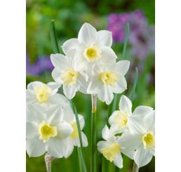 Narcis ´Pueblo´, bal. 5 ks, 12/14