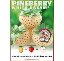 Fragaria Pineberry® ´White Dream´ / Ananásojahodník, K9