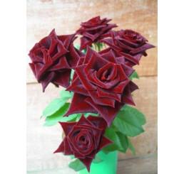 Rosa ´Black Matisse´ / Růže čajohybrid, keř, BK
