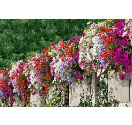 Kolekce 18 rostlin pro slunečný balkon, bal. 18 ks sadbovačů
