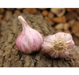 Allium sativum ´Slavin II´ / Kuchyňský česnek na výsadbu, bal. 3 hlaviček, 125 g