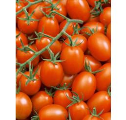 Rajče cherry ´Mirado®Orange´, přirozeně rezistentní, roubovaná rostlina, K12