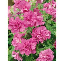 Petunia x atkinsiana ´Tumbelina® Candyfloss´ / Petúnie plnokvětá růžová, bal. 6 ks sadbovačů