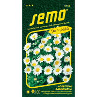 Chrysanthemum paludosum / Kopretina balkonová ´SNĚHURKA´, bal. 0,3 g