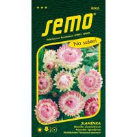 Helichrysum bracteatum / Slaměnka RUŽOVÁ velkokvětá, bal. 0,4 g