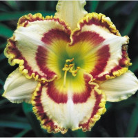 Hemerocallis 'Lady Betty Fretz' / Denivka, C1,5