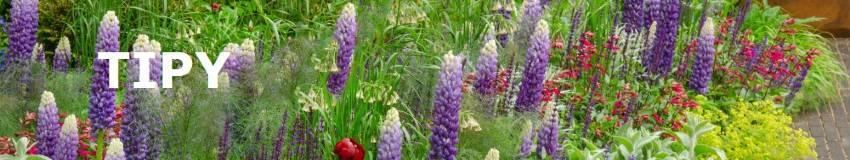 Tipy na rostlinky