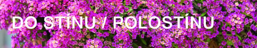 Balkonové květiny do stínu / polostínu