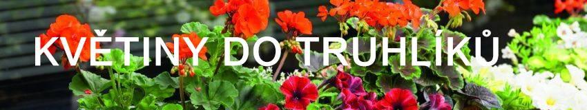 Květiny do truhlíků