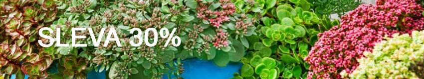 Slevy 30% na rostlinky