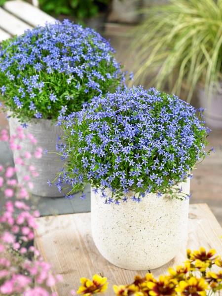 Hnojení a péče o rostliny v nádobách