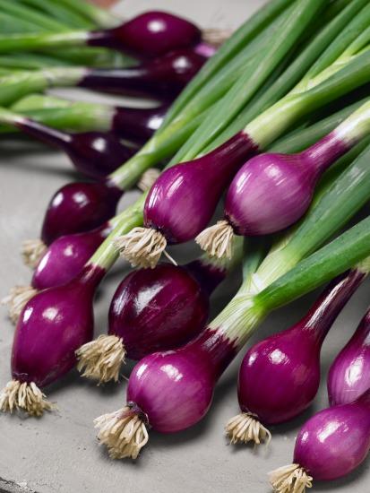 Semena zeleniny a předpěstování (Allium cepa)
