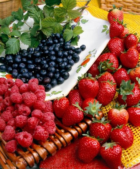 Výsadba a výběr kultivarů