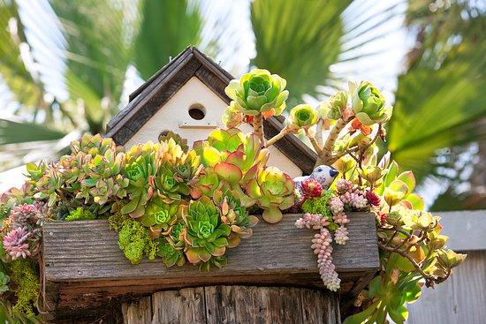 Ptačí budky a potrava pro ptáky