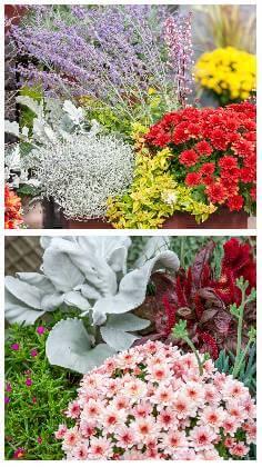 Balkónové květiny na podzim