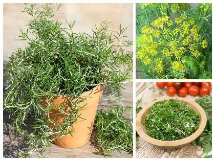 Pěstování bylinek na balkoně
