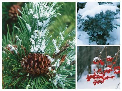 Dřeviny v zimě