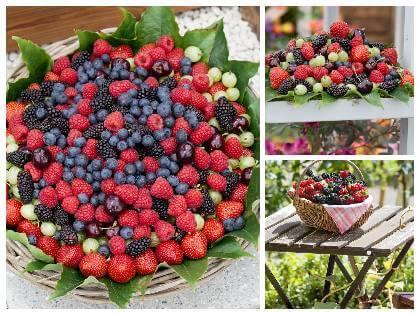 Drobné ovoce balkon