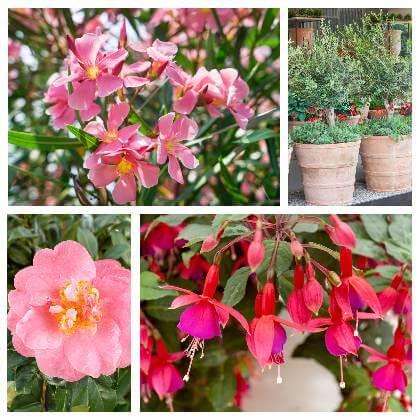 Exotické rostliny pěstování
