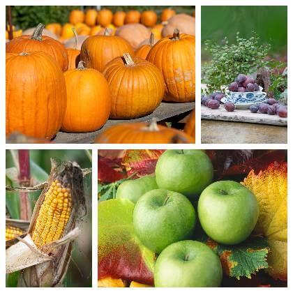 Podzimní ovoce a zelenina