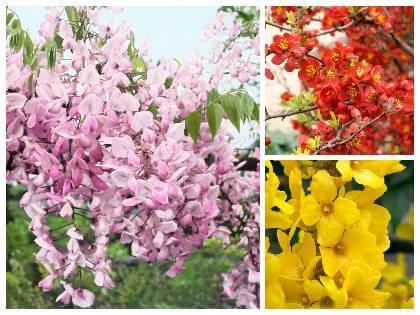Keře kvetoucí na jaře