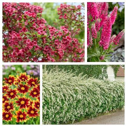 Kvetoucí záhony