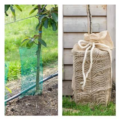 Ochrana kmenů ovocných stromů