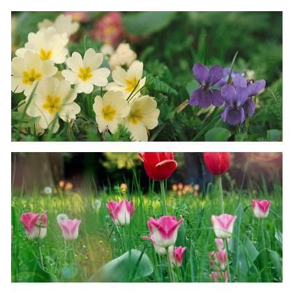 Okrasná zahrada v květnu