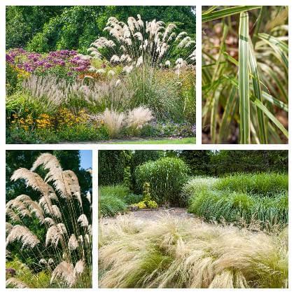 Okrasné trávy eshop