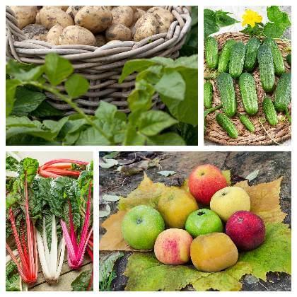 Ovoce a zelenina v září