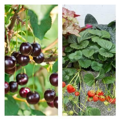 Ovocná zahrada v červnu